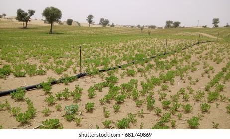 Desert Irrigation Images, Stock Photos & Vectors | Shutterstock