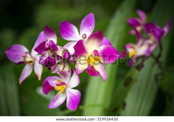 ground orchid flower.