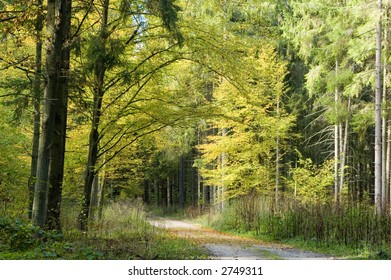 Ground road leading outside forest under canopy of the autumnal trees