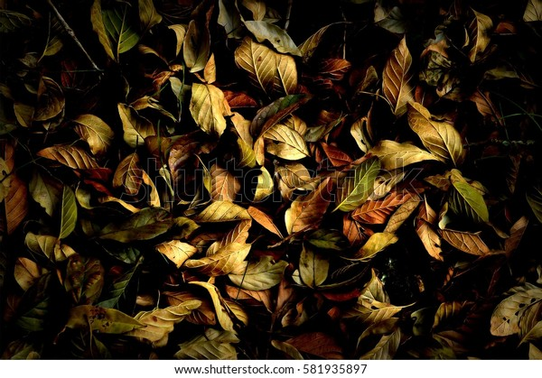 Ground texture covered with autumn leaves