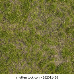 Ground texture with dry grass and small, rare tufts of green plants.