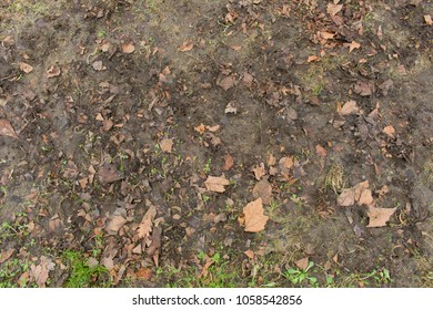 Ground Texture Reference