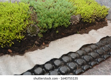 Groundcover plants stonecrops and houseleeks (Sempervivum) in landscape design. Growing Stonecrops on geotextile and geomembrane foundation