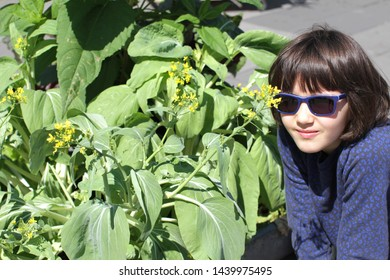grounded happy young girl with sunglasses looking at the flowers of a homegrown mustard plant in a city garden, balcony or street, sunlight
