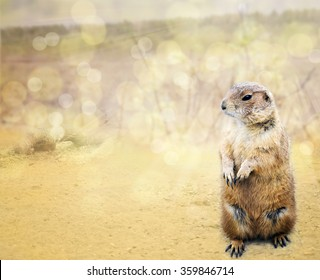 Groundhog emerged from his burrow  o see shadow on the background bokeh