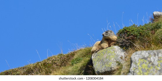 Groundhog sitting on a rock in front of a blue sky in Valle Varadega
