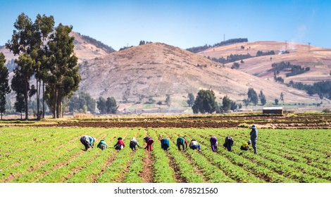 Grouo of people working in a field of agriculture.
