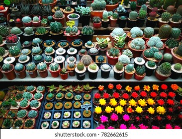 Grouo of several kinds of small colorful decorative cactus