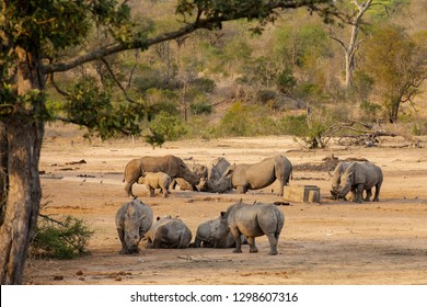 Group of 12 white rhinos with small calf around an artificial waterhole at sundown in South Africa
