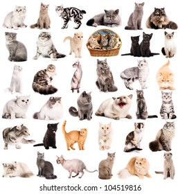 Group of 36 cats breeds in front of a white background