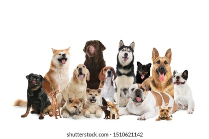 Group of adorable dogs on white background