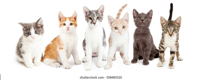Group of adorable little kittens of different breeds sitting together in a row. Isolated on white.