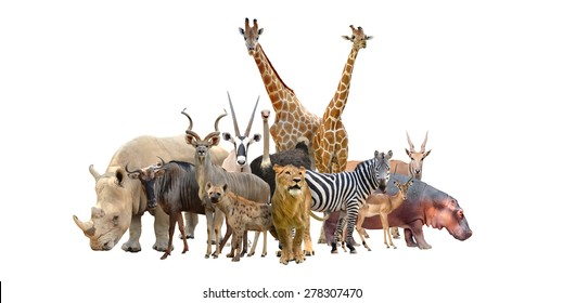 Group of wild animals together - photo#51