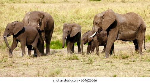 Group of african elephants including baby elephant walking in african savannah.