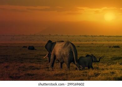 Group of African elephants  (Loxodonta africana) in Amboseli National Park, Kenya