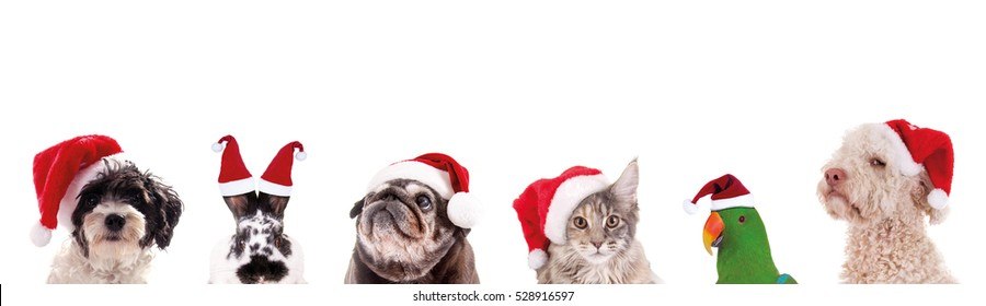 Group of animal heads with santa claus hats