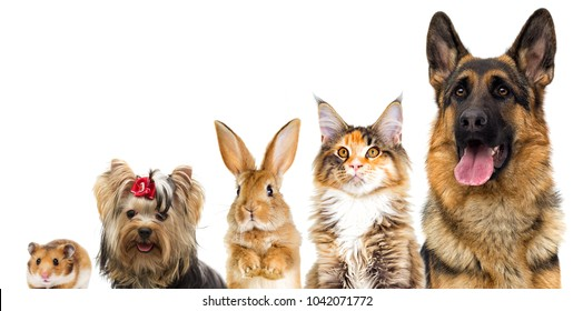 group of animals looking looking on a white background isolated