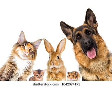 group of animals looking on a white background isolated