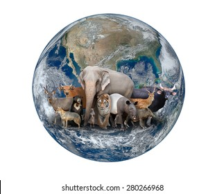 group of asia animal with planet earth, Element of this image are furnished by NASA
