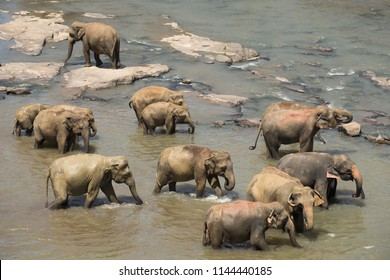 Group of Asian elephants crossing tropical river. Amazing animals in wild nature of Sri Lanka. Top view