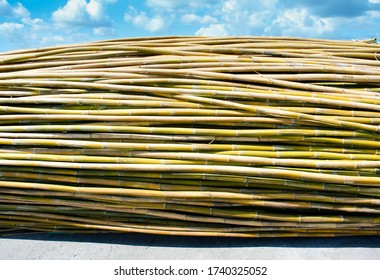 Group of bamboo on ground