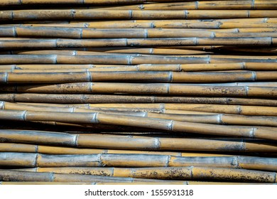 Group of bamboos background.Pile of bamboo pole texture with natural pattern.