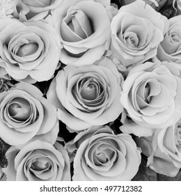 The group of beautiful roses flower in black and white tone blackground for Valentine's day.