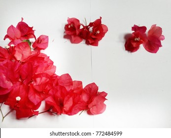 group of beauty color flowera on white background