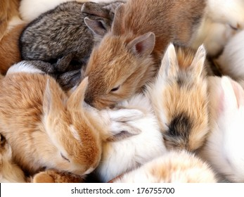 group of Beauty Cute sweet Little Easter Bunny rabbits baby in variety colors black brown and white