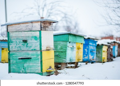 Group beehives in the winter garden with snow covering. Unpacking Beehives After Winter.