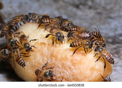 Group of bees eating rotten fruit.