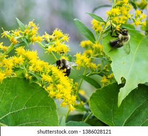 group of bees or honeybee in Latin Apis, european or western honey bee isolated on the white background, golden honeybee - Image of bees collecting pollen