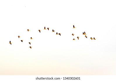 Group birds flying.