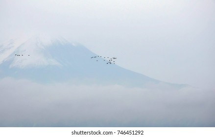 Group of birds flying by famous Fuji mountain of japan in misty cloudy morning