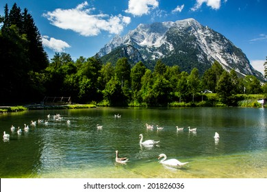 Group of birds in high Alps Austria