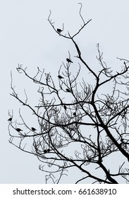Group of birds perched on a dead tree.