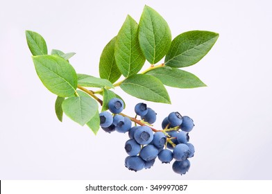 Group of blueberries with leaves on a branch. Studio shoot.