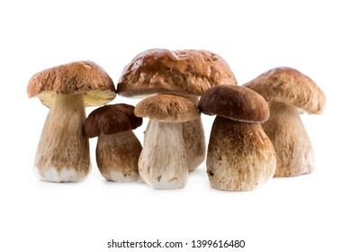 Group boletus mushroom isolated on white background.Boletus mushrooms, Porcini Mushroom, Forest, Edible Mushroom