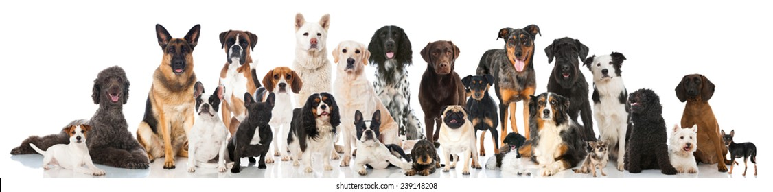 Group of breed dogs
