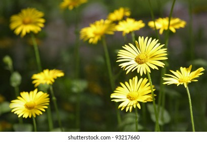 Group of bright sunny summer flowers.