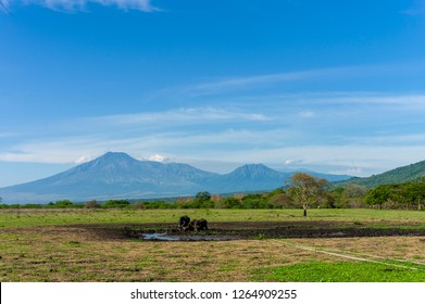 Group of buffalo in Baluran National Park, Banyuwangi, East Java - Indonesia.