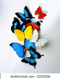 A group of butterflies on white background