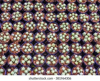 A group of cactus in garden