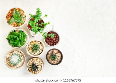 group of cactus pot on white surface textured.decoration objects top view background.
