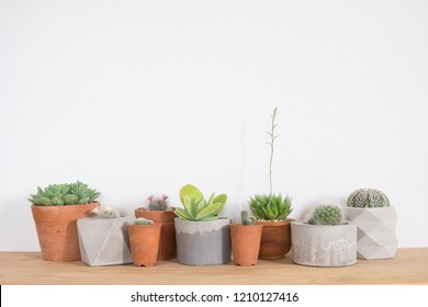 Group of cactus and succulents plant on table