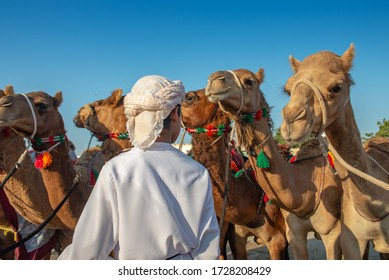 Group Of Camels and arabian beduin Kid stand in Ibra desert in countryside of Muscat, Oman.