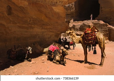 A group of camels waiting owner in front of Petra's Tomb, Jordan