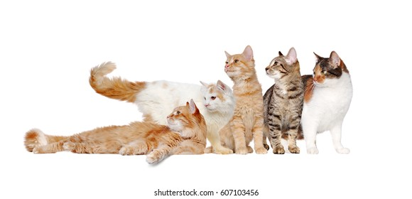 A group of cats of different breeds in a raw looking together to the side