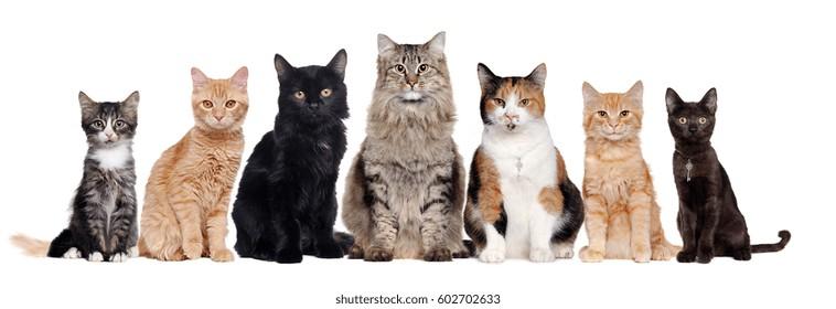 Cat Images Stock Photos Vectors Shutterstock