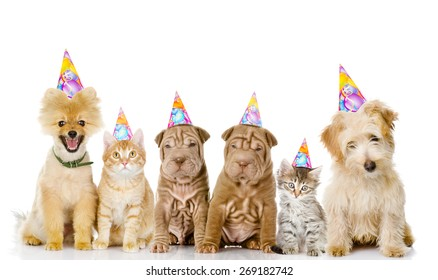 Group Of Cats And Dogs With Birthday Hats Isolated On White Background